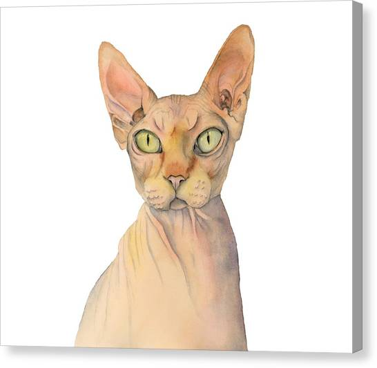 Sphynx Cats Canvas Print - Sphynx Cat Watercolor Portrait by NamiBear