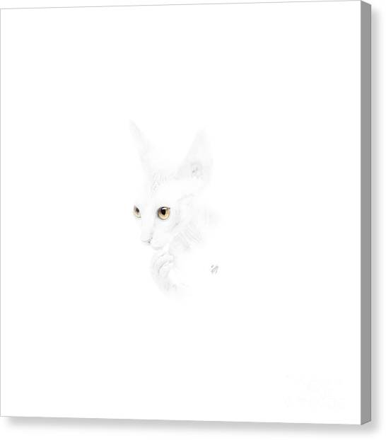Sphynx Cats Canvas Print - Sphynx Kitten No 01 by Maria Astedt