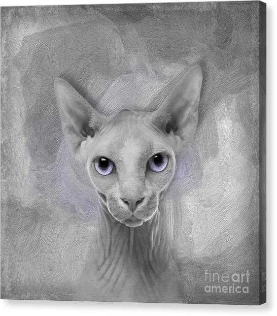 Sphynx Cats Canvas Print - Sphynx No 19 by Maria Astedt