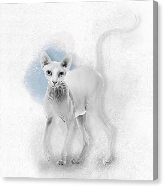 Sphynx Cats Canvas Print - Sphynx No 24 by Maria Astedt