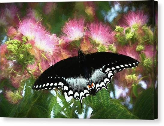 Mimosa Canvas Print - Spice Of Life by Donna Kennedy