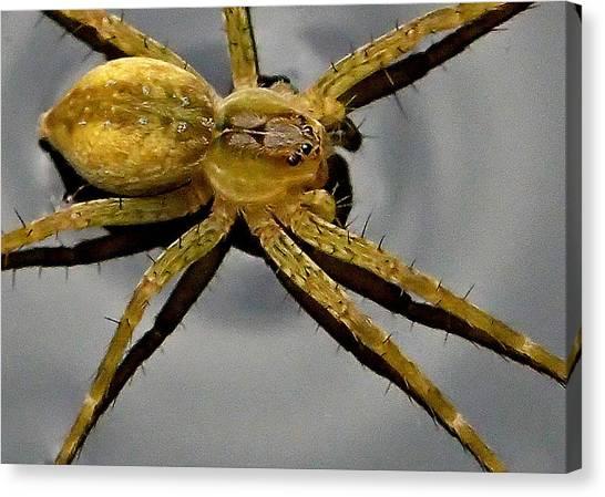 Spider Canvas Print