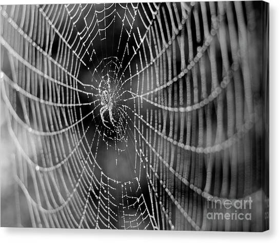 Spider In A Dew Covered Web - Black And White Canvas Print