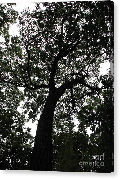 Spider Tree Canvas Print