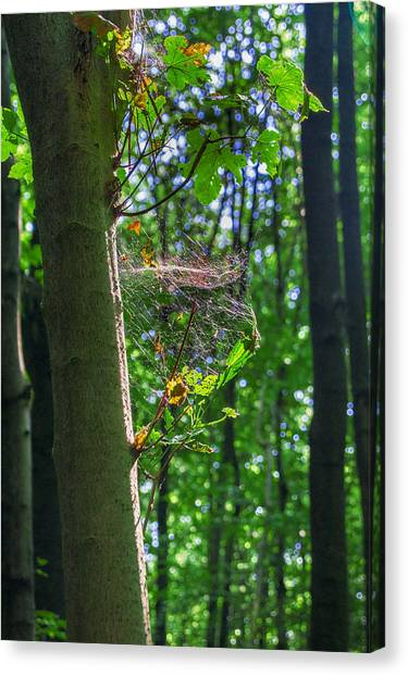 Spider Web In A Forest Canvas Print