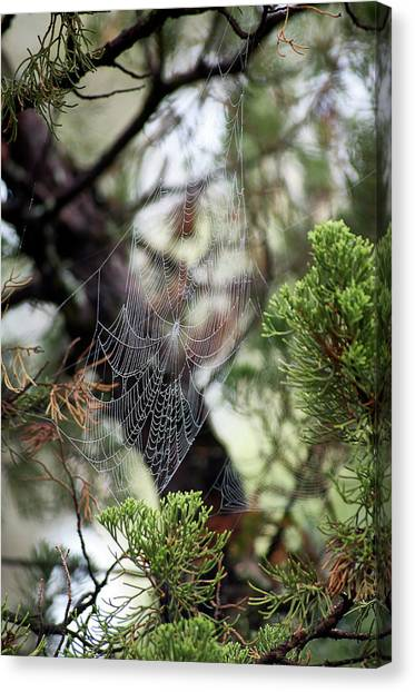 Canvas Print featuring the photograph Spider Web In Tree by Willard Killough III