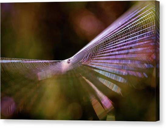 Spider Web Canvas Print - Spider Web Rainbow Magic by Roeselien Raimond
