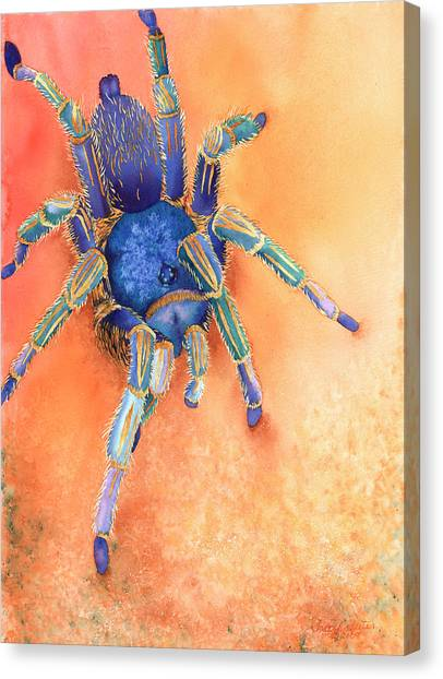 Costa Rican Canvas Print - Spidy by Tracy L Teeter