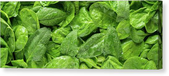 Spinach Canvas Print - Spinach Panorama by Steve Gadomski