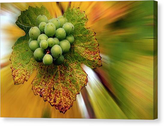 Creative Manipulation Canvas Print - Spinning Grapes by Jean Noren