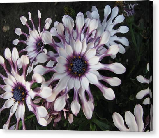 Spinning Pinwheels Canvas Print by Kathy Roncarati