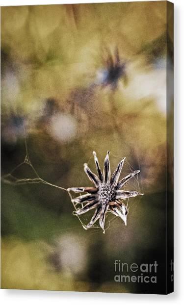 Spinnumwobner Bluetenstand Canvas Print