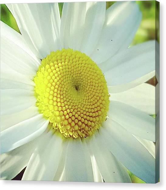 Fibonacci Canvas Print - Spira by Sonya Zohar