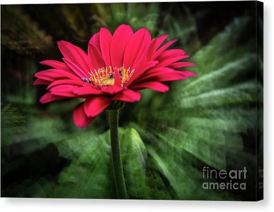 Spiral Pink Flower Focus Canvas Print