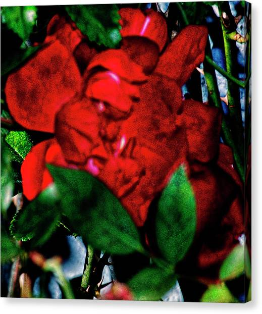 Spirit Of The Rose Canvas Print