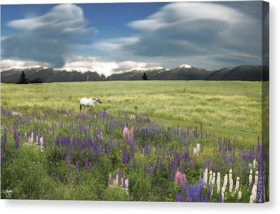 Spirit Pony In High Country Lupine Field Canvas Print