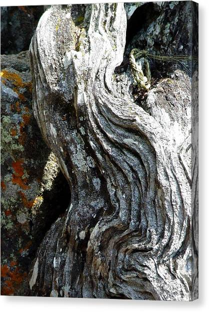 Spirit Tree Root Canvas Print by Patricia Bigelow