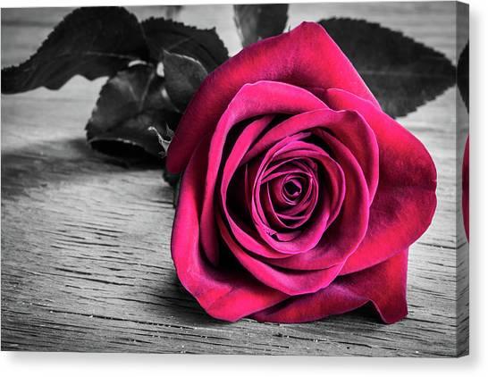 Splash Of Red Rose Canvas Print