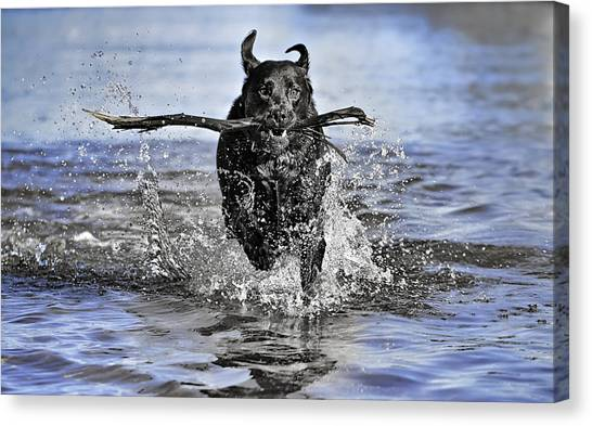 Splashing Fun Canvas Print
