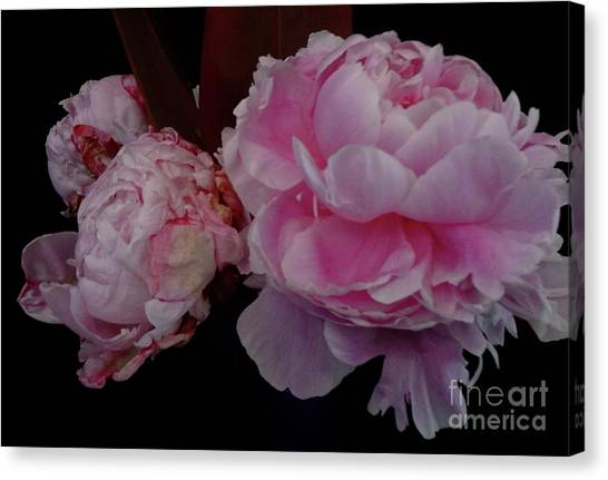 Splendor In Pink Canvas Print