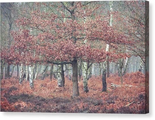 Sherwood Forest Canvas Print - Splendour by Chris Dale