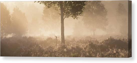 Sherwood Forest Canvas Print - Split by Chris Dale