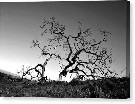 Split Single Tree On Hillside - Black And White Canvas Print