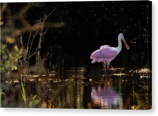 Spoonbill Fishing For Supper Canvas Print