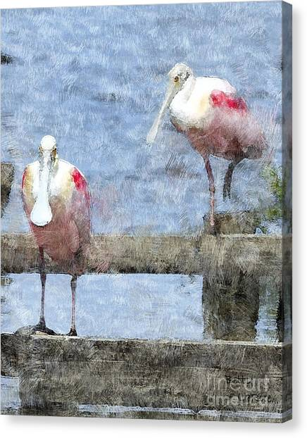Spoonbills Canvas Print - Spoonbills Hanging Out by Betty LaRue