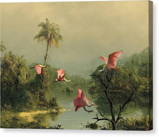 Spoonbills In The Mist Canvas Print