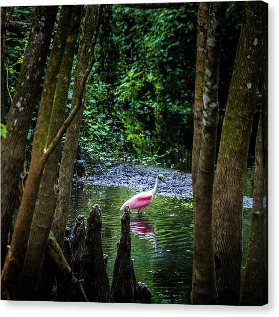 Egrets Canvas Print - Spooning by Marvin Spates