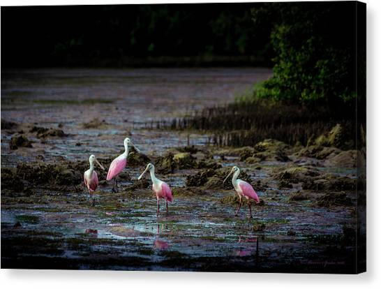 Florida Wildlife Canvas Print - Spooning Party by Marvin Spates