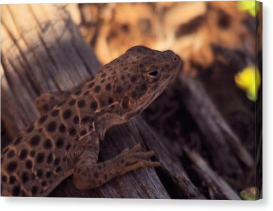 Little Things Canvas Print - Spotted Lizard by Jeff Swan