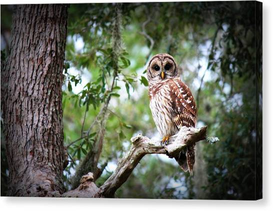 Spotted Owl II Canvas Print