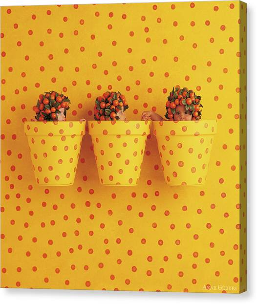 Spotted Canvas Print - Spotted Pots by Anne Geddes