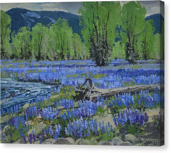 Spread Creek Lupine Canvas Print by Lanny Grant