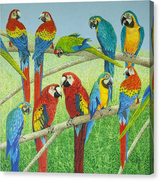 Macaws Canvas Print - Spreading The News by Pat Scott
