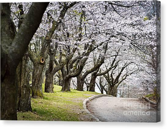 Path Canvas Print - Spring Apple Orchard by Elena Elisseeva
