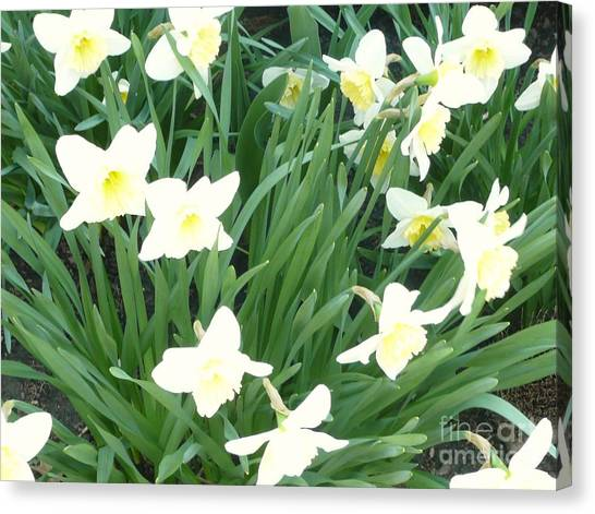 Spring At Last Canvas Print by Barb Montanye Meseroll