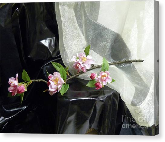 Spring Awakening With Pink Cherry Blossoms Canvas Print