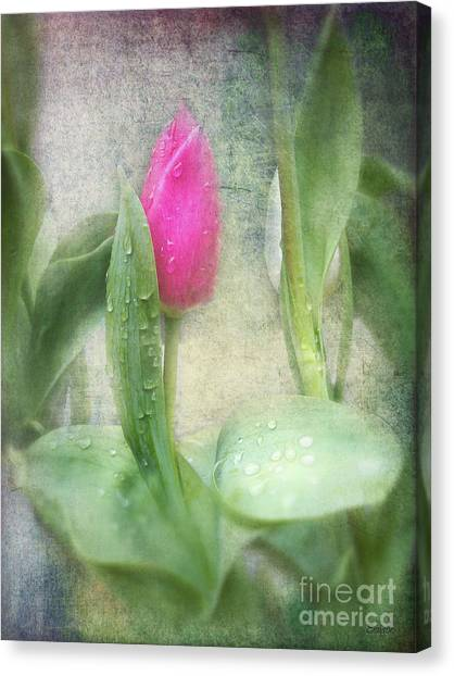 Spring Bath Canvas Print