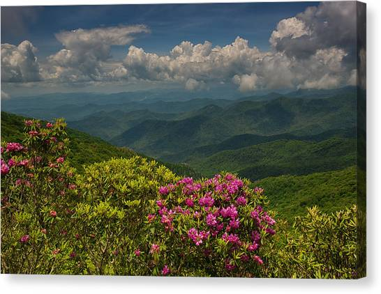 Spring Blooms On The Blue Ridge Parkway Canvas Print