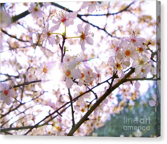 Blossom Canvas Print - Spring Blossom by Helen White