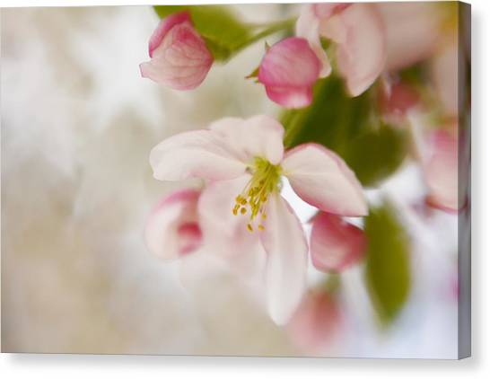 Spring Blossom Whisper Canvas Print
