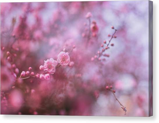 Spring Blossoms In Their Beauty Canvas Print