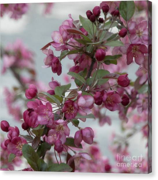 Canvas Print featuring the photograph Spring Blossoms by PJ Boylan
