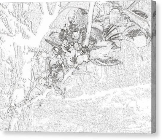 Spring Blossums Canvas Print