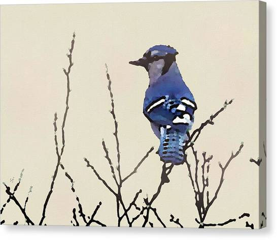 Spring Bluejay Canvas Print