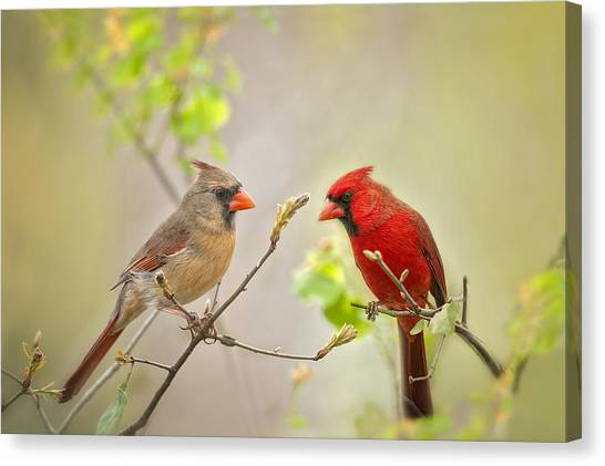 Cardinals Canvas Print - Spring Cardinals by Bonnie Barry