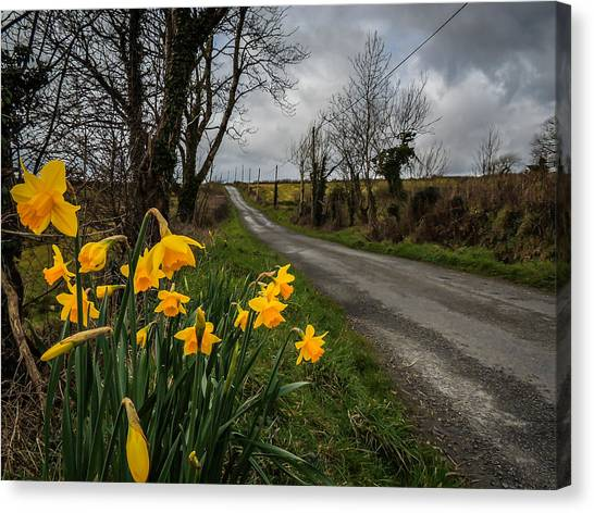 Canvas Print featuring the photograph Spring Daffodils On An Irish Country Road by James Truett